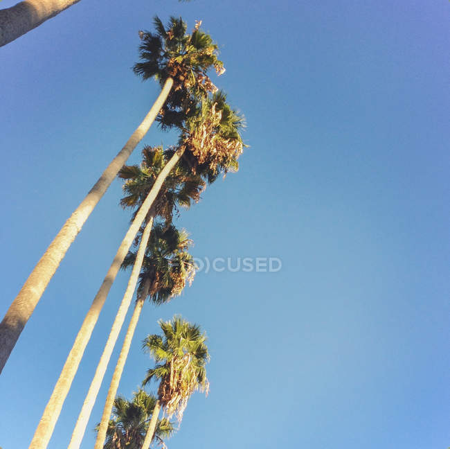 Low angle view of palm trees against blue sky — Stockfoto