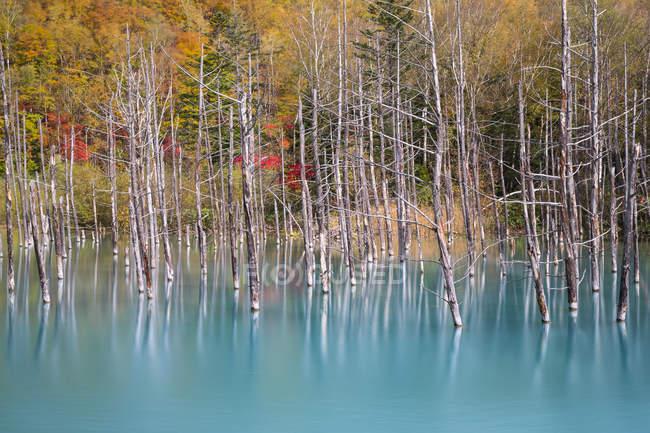 Vista panorâmica de árvores mortas no Lago azul, Hokkaido, Japão — Fotografia de Stock