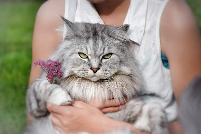 Cropped image of Teenage Girl sitting with a cat on lap — Stock Photo