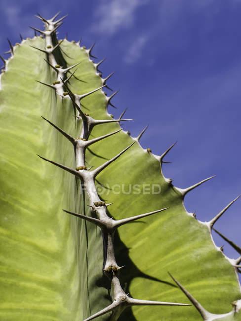Тернистий зелений сукулентних рослин крупним планом — стокове фото