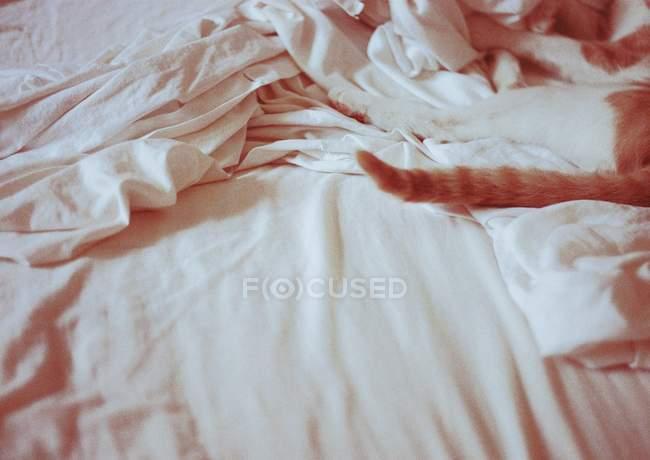 Обрезанное изображение спящего кошачьего хвоста на кровати — стоковое фото