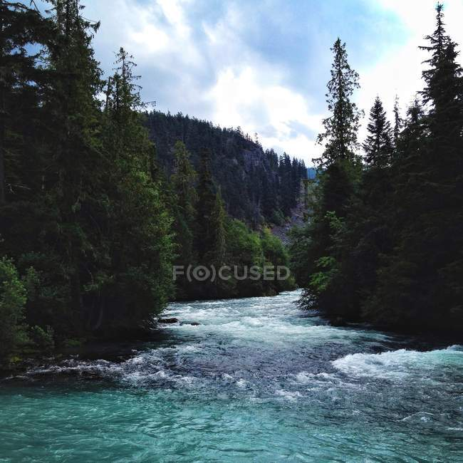 Lush river on sunny day, Canada, British Columbia — Stock Photo