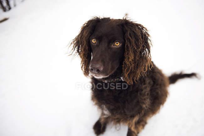 Симпатичная черная собака, сидящая в снегу — стоковое фото