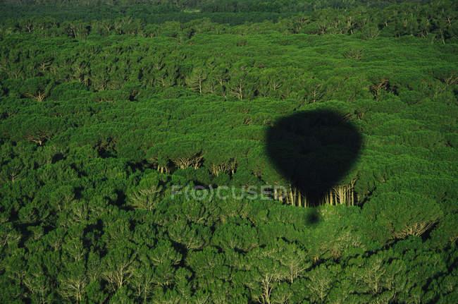 Vista panorámica de la sombra del globo de aire caliente en los árboles - foto de stock