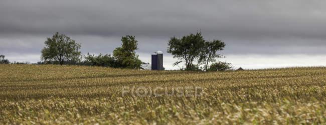 Vista panoramica di frumento campo, Michigan, Usa — Foto stock