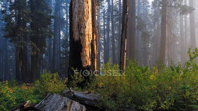 Vista panorámica del fuego cerca de Kings Canyon, Hume California, EE.UU. - foto de stock
