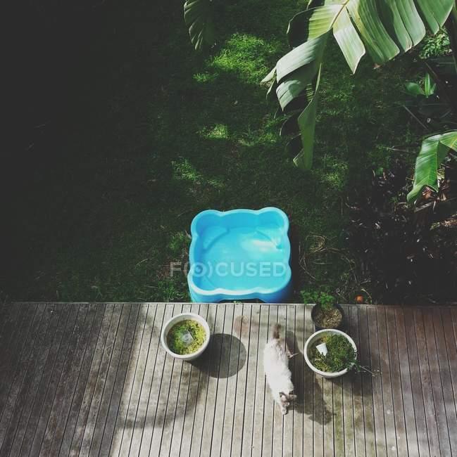 Голубой бассейн и кошка, гуляющая на зеленом заднем дворе, вид сверху — стоковое фото