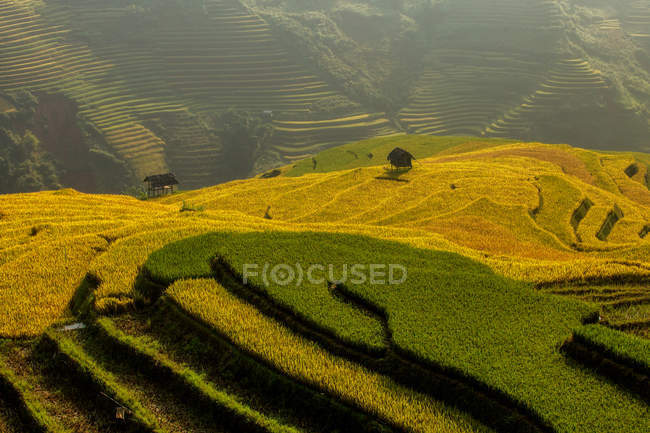 Scenic view of terraced rice fields, Vietnam — Stock Photo