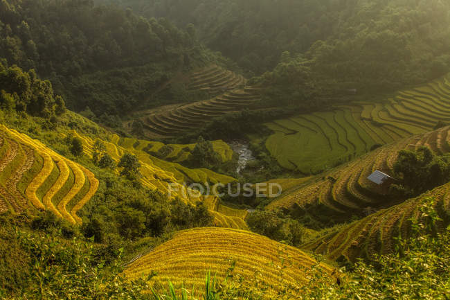 Elevated view of Rice Terraces, Vietnam — Stock Photo
