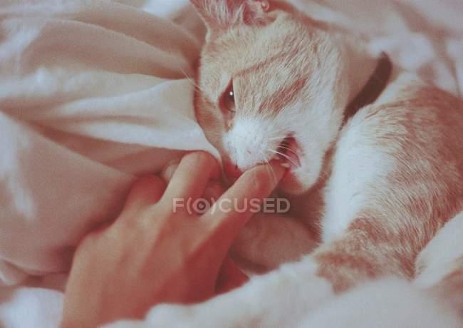 Обрезанный образ женщины, играющей с пушистым котом в постели — стоковое фото