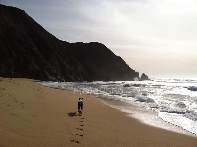 Vista posteriore del cane che corre sulla spiaggia — Foto stock