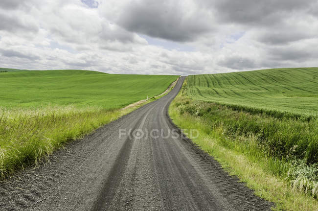 Scenic view of rural road among green grass — Stock Photo