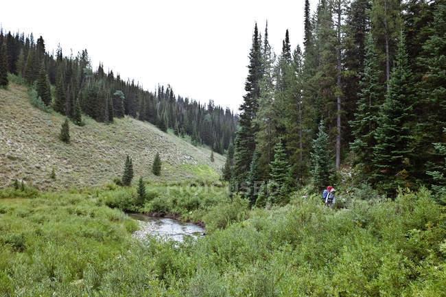 Woman hiking along river, Wyoming, America, USA — Stock Photo