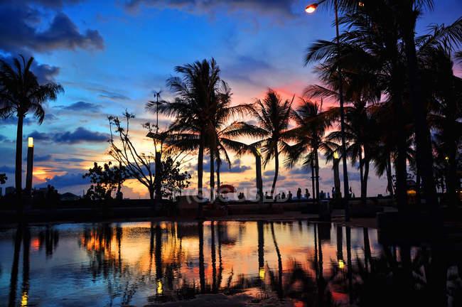 Мальовничим видом з силует дерева пальми на заході сонця, Джакарта, Індонезія — стокове фото