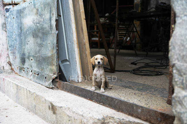 Cute little puppy dog sitting in doorway of old building — Stock Photo