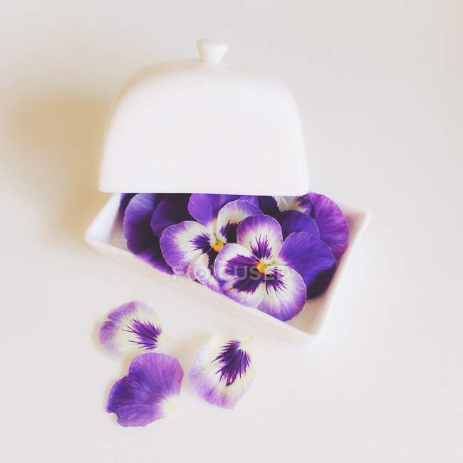 Pansy flowers in butter dish on white background — Stockfoto