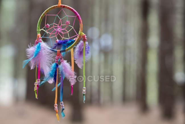 Cazador de sueños multicolor colgantes en el bosque contra un fondo borroso - foto de stock