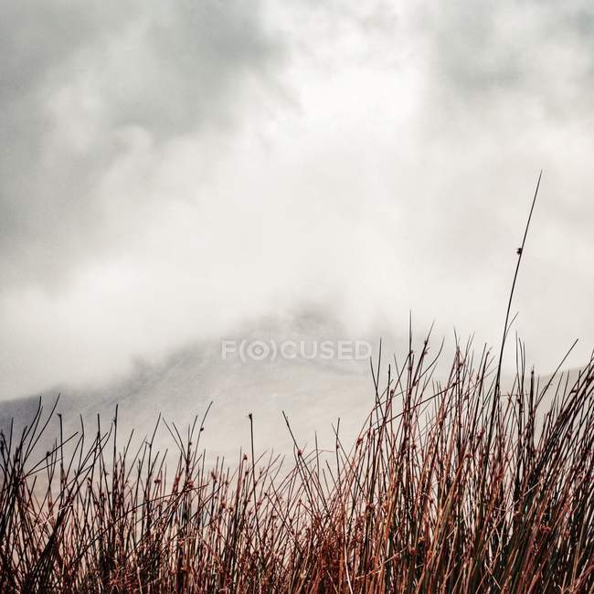 Majestic view of mist in mountains against long grass — Stockfoto
