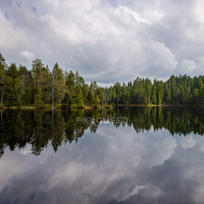 Majestic view of forest reflecting in lake under cloudy sky — Stock Photo