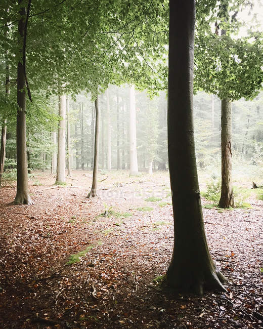 Живописный вид на зеленый лесной пейзаж — стоковое фото