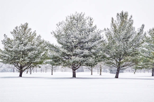 Vista panorâmica do jardim de inverno na neve — Fotografia de Stock