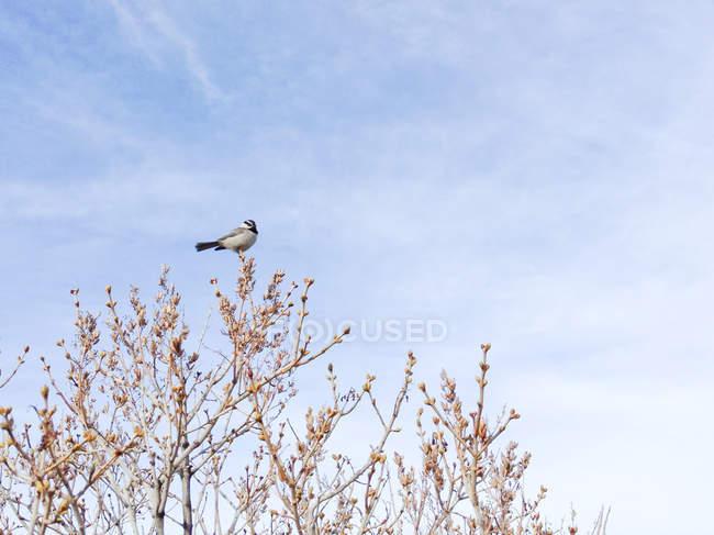 Petit oiseau perché sur le sommet d'un arbre à la nature sauvage — Photo de stock