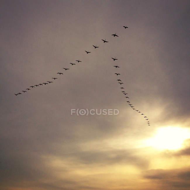 Scenic view of flock of birds in sky — Stock Photo