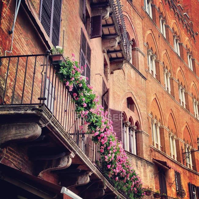 Scenic view of balcony flowers in Tuscany, Tuscany, Italy — Stock Photo