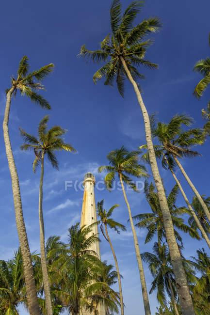 Vue à angle bas du phare entouré de palmiers, île Belitung, Indonésie — Photo de stock
