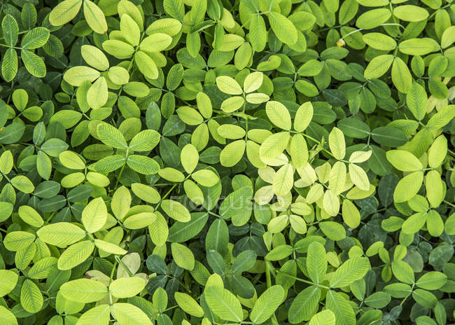 Vista do close-up da planta com folhas verdes — Fotografia de Stock