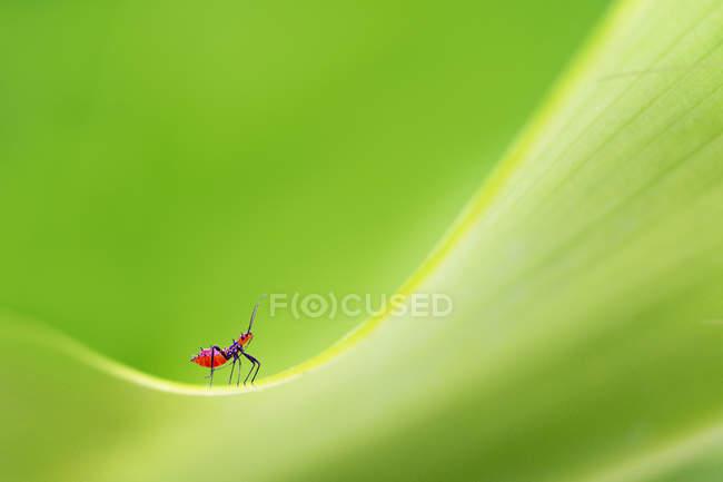 Primo piano di una formica contro sfondo sfocato — Foto stock