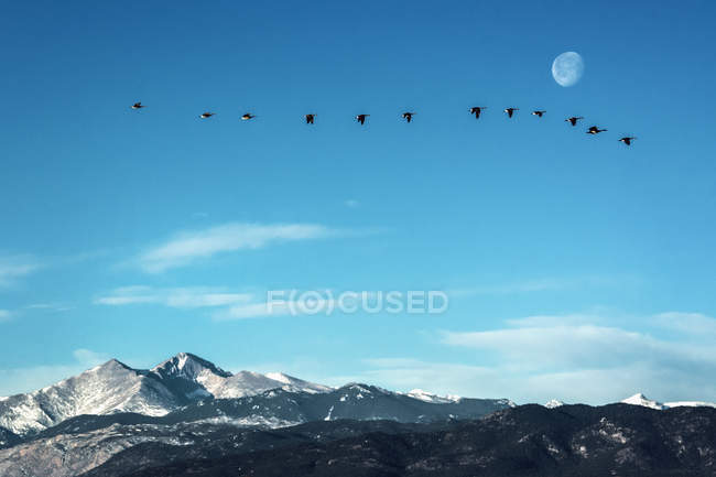 Flock of geese flying in front of the moon over peaks of the Rocky Mountains, Colorado — Stock Photo