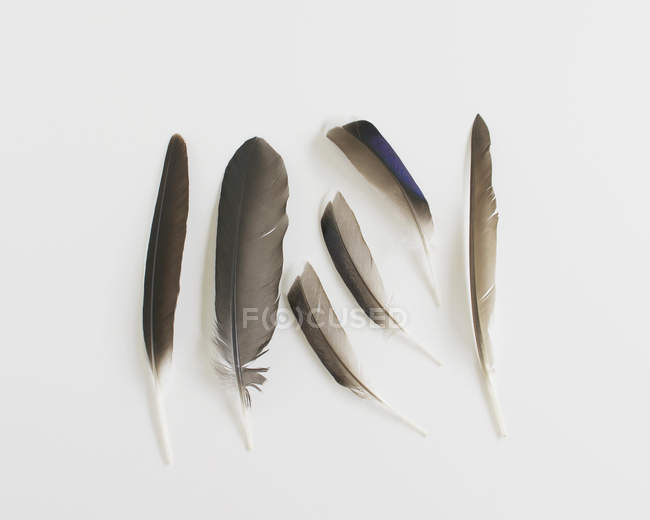Collection of feathers on white background — Stock Photo