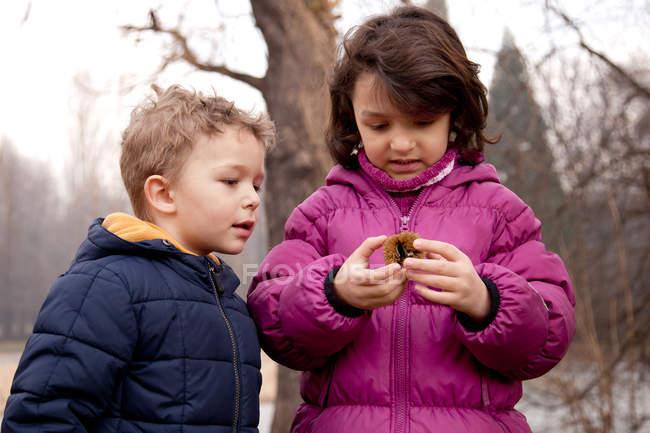 Два маленьких детей, глядя на Честнат — стоковое фото