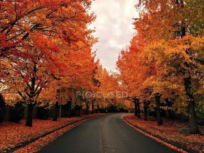 Vue panoramique de la route bordée d'arbres en automne — Photo de stock