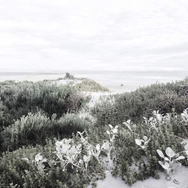 Malerische Aussicht von Beach Vegetation, Hermanus, Western Cape, Südafrika — Stockfoto