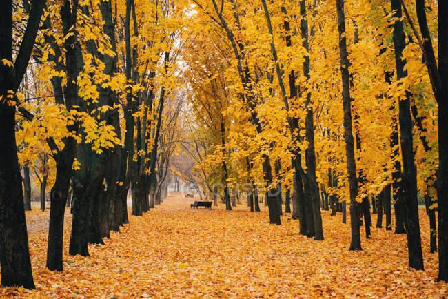 Vista panorámica del sendero de ree lined en el parque en otoño - foto de stock
