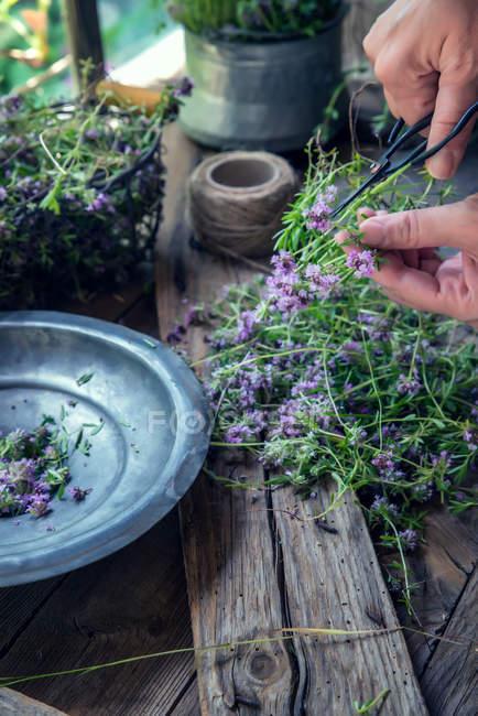Femelle mains préparation fleurs de lavande sur table en bois — Photo de stock