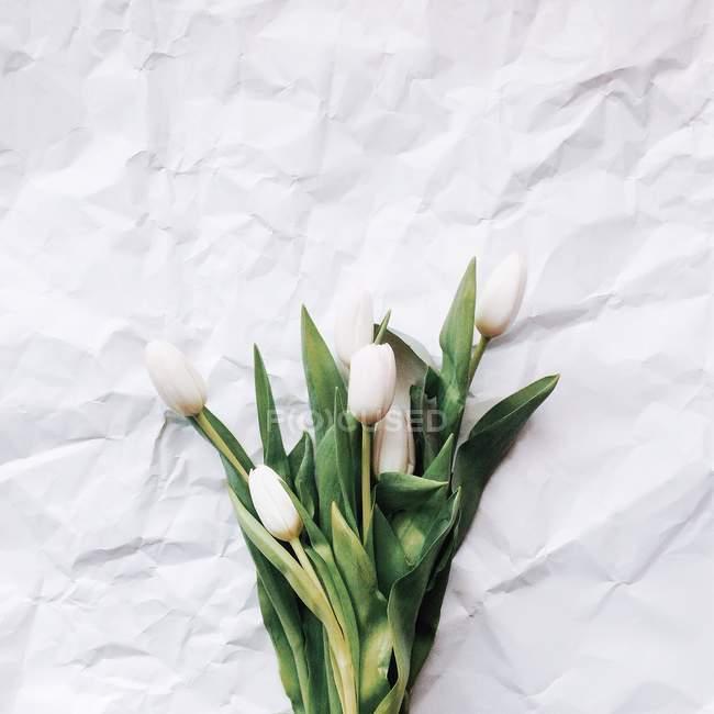 Frisch geschnittene weiße Tulpen auf weißem Papier — Stockfoto
