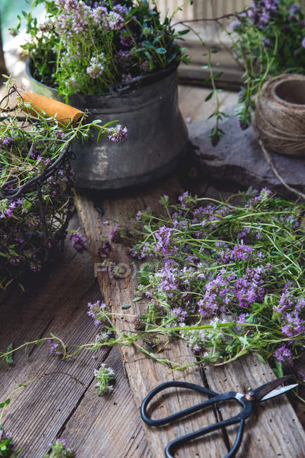 Close-up of lavender flowers and garden tools — Stock Photo
