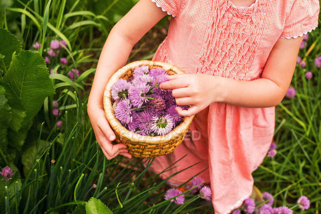 Cropped image of Girl collecting chive blossoms in a garden — Stock Photo