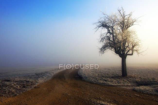 Vue panoramique sur l'arbre dans la brume, Gallenkirch, Suisse — Photo de stock