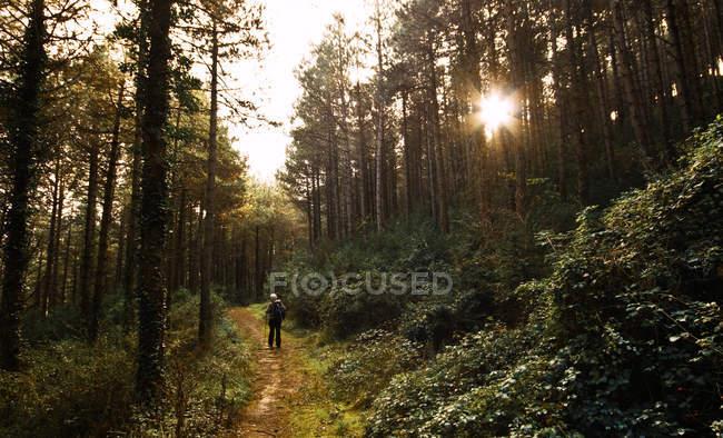 Одинокий человек, гуляющий в лесу на закате — стоковое фото
