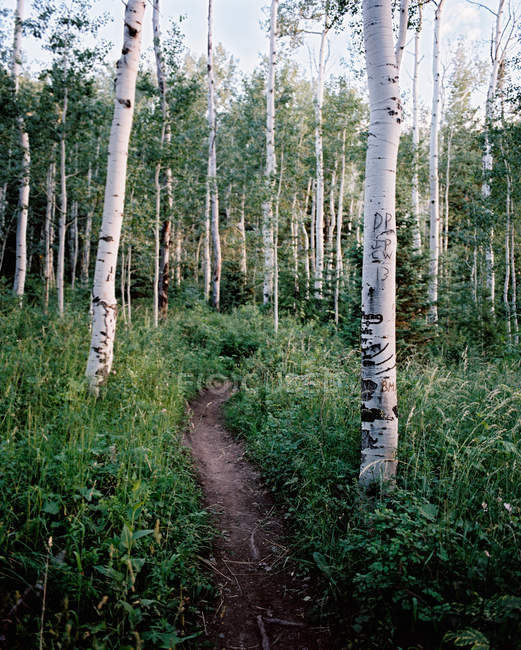 Scenic view of path through the forest, Fork Canyon, Utah, USA — Stock Photo