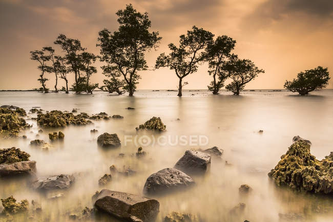 Scenic view of trees on a beach at sunset, Banten, Indonesia — Stock Photo