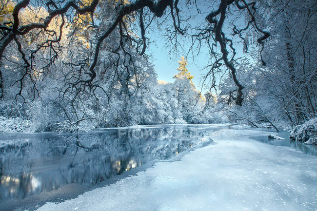 Majestic view of snow covered trees along river, Cavan, Ireland — Stock Photo