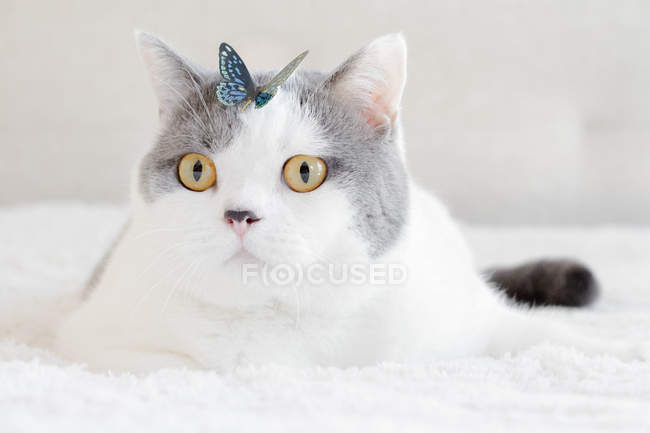 Cute fluffy cat with colorful butterfly on head — Stock Photo