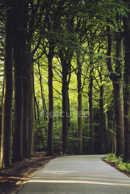 Scenic view along road curving through forest, Brugge, Belgium — Stock Photo