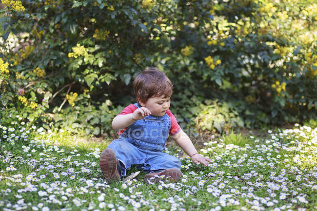 Boy sitting on grass with daisy flowers — Stock Photo