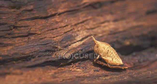 Закри коник, сидячи на кора дерева — стокове фото